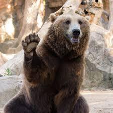 Converting a bear