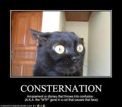 consternation