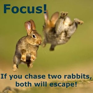 Dont chase two rabbits at once in marketing