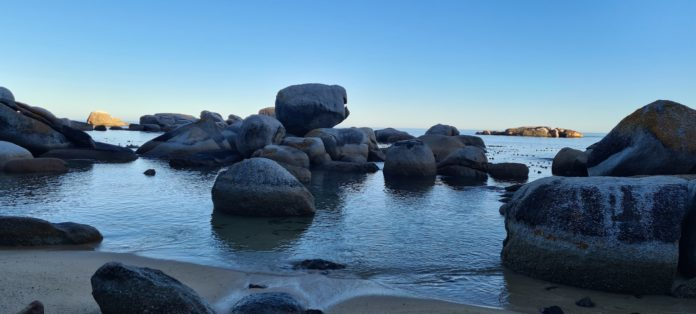 Cosy Bay Covid Thoughts by Barry Varkel